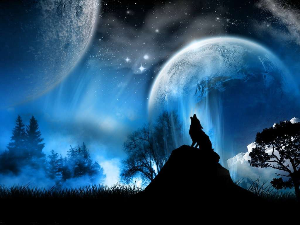 Stock Detail Wolf At Night Official Psds