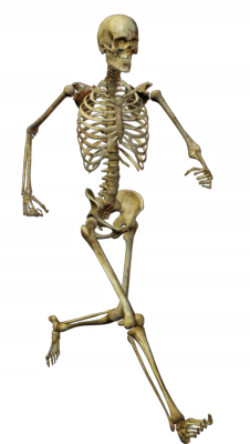 Human bones png - photo#9