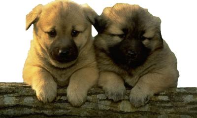 Dog Training Classes Near Johnstown Ny