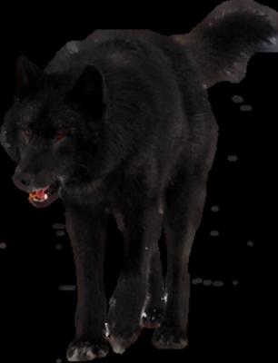Ranger the Reborn {for adoption} ((unless Lark lets me keep him)) Black-Wolf-psd70812