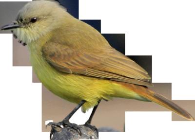PSD Detail   Colorful Bird   Official PSDs  Bird