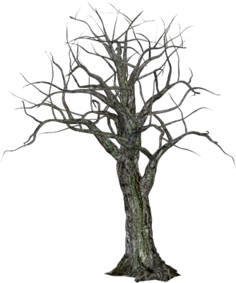 Spooky tree png images galleries with for Creepy trees for halloween