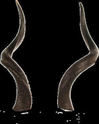 PSD Detail   Horns   Official PSDs
