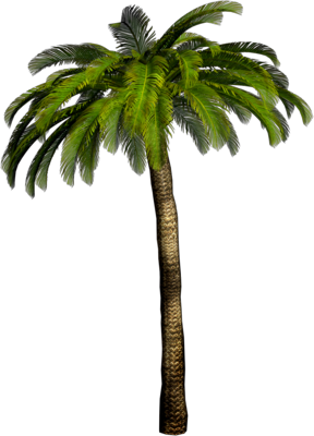 Pin Date Palm Tree Photoshop on Pinterest