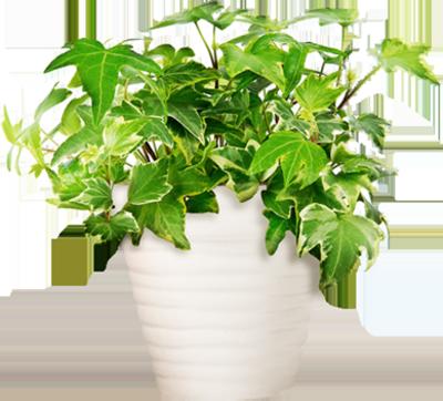 Psd detail potted plant official psds for Plante de pot exterieur