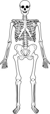 sample scheme of work, Skeleton
