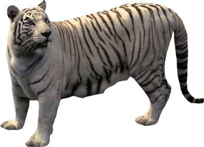 PSD Detail | White Tiger | Official PSDs
