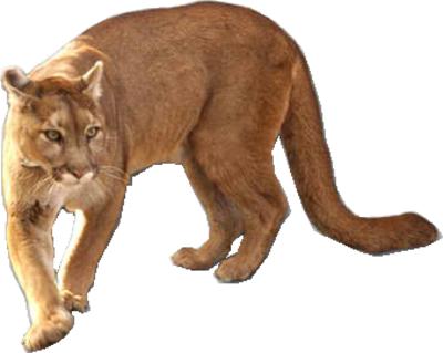 cougar-psd80626.png