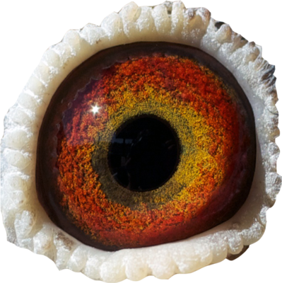 monster eye | PSD Detail